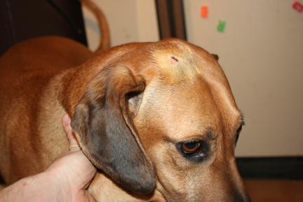 Jake's head wound